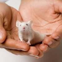 'Dementia research is sexist' because it focuses on male mice