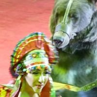 Shameful Moscow circus show forces bear to dance for children