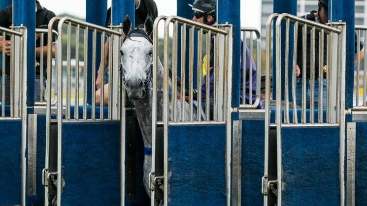 Stewards warn Chautauqua down to last chance after refusing to jump again