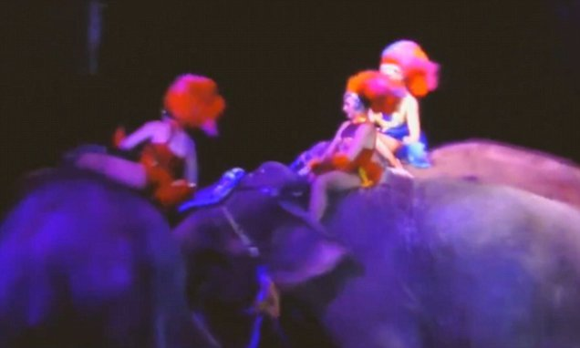 Audience crushed when elephant falls on them in circusperformance