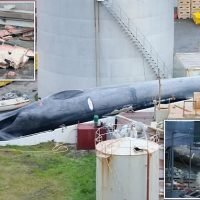 Whalers are accused of killing a rare blue whale off of Iceland