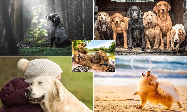 Here are the winner's of the Kennel Club dog photography competetion