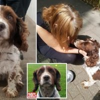 Cocker Spaniel is back with his owner after being 'snatched' in 2013