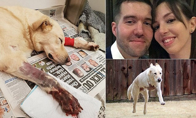 Dog left fighting for its life after being bitten by a pair of snakes