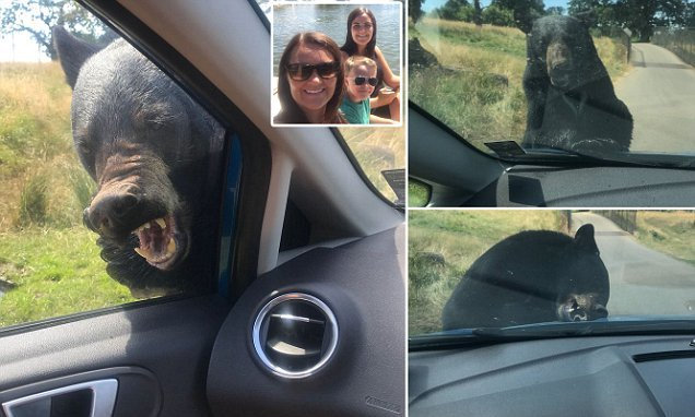 Bear attacks grandmother and grandson in car at Woburn Safari Park