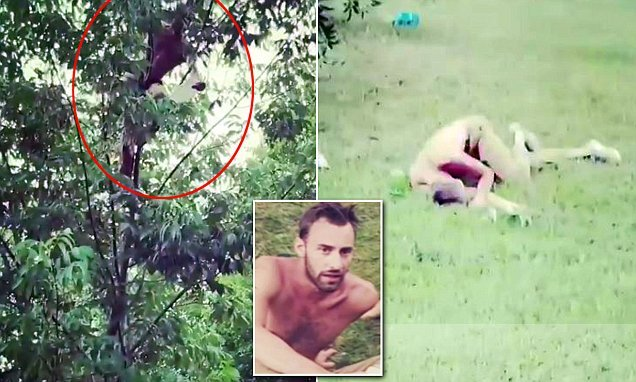 Man shatters his pelvis and ribs after falling out of a tree