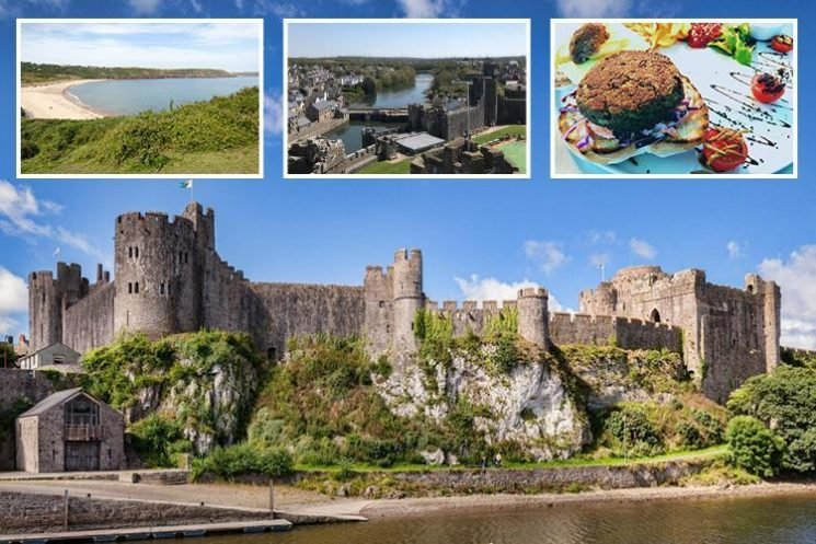Insects are on the menu in glorious Pembrokeshire