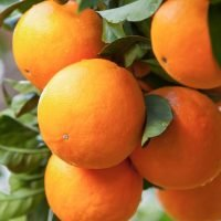 Orange a day keeps poor eyesight away, says new research