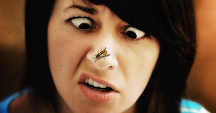 Everything you need to know about insect stings and bites