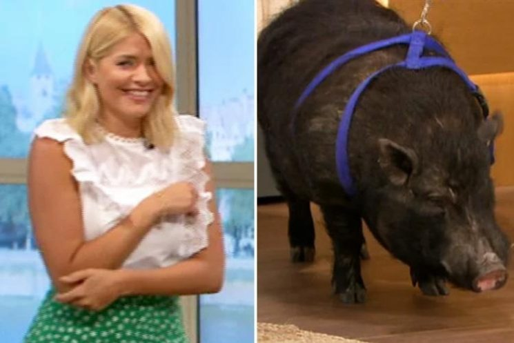 Holly Willoughby squeals as This Morning's mystic World Cup pig poos on studio floor before predicting England will beat Colombia