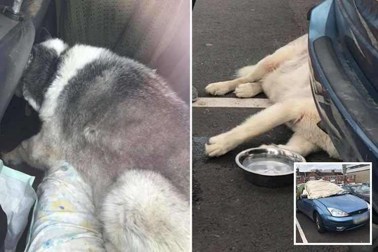 Shocking pictures show husky trapped inside locked car for two hours in 29C temperatures – and the owner's response was shocking