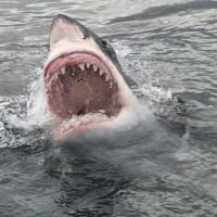 This Is How Likely It Is a Shark Attack Will Really Happen to You