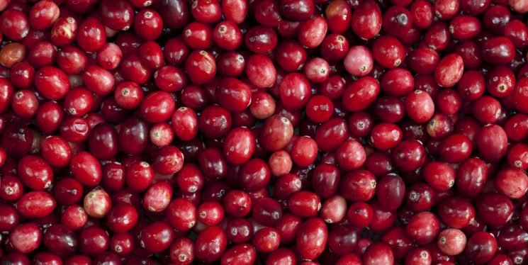 Cranberries Are Legit Good For You, But They Still Won't Cure Your UTIs