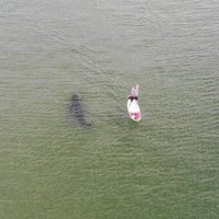 This is every paddleboarder's worst nightmare