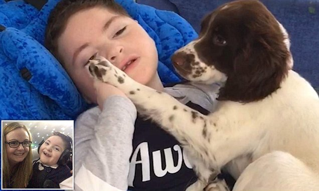 Mother's video shows bond between new puppy and her disabled son
