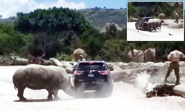 Moment huge rhino tries to OVERTURN family SUV in safari park