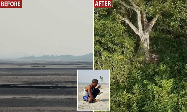 Man plants a tree everyday for 40 years to create a 1,360-acre FOREST