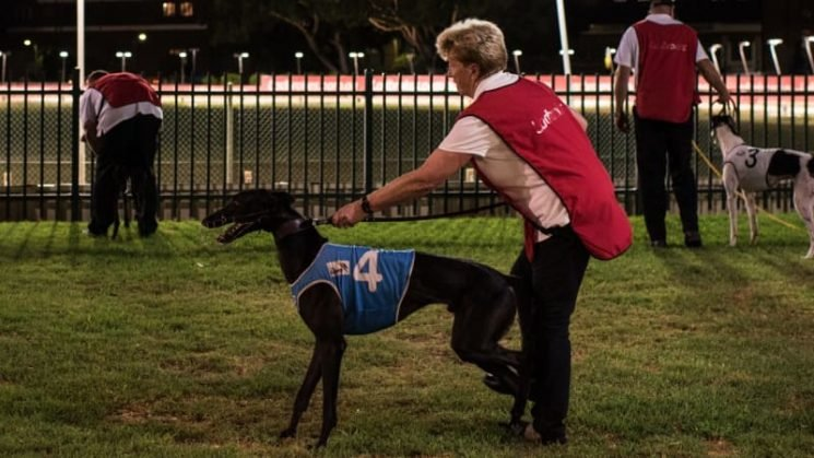 Huge boost for NSW greyhound industry with first million-dollar race