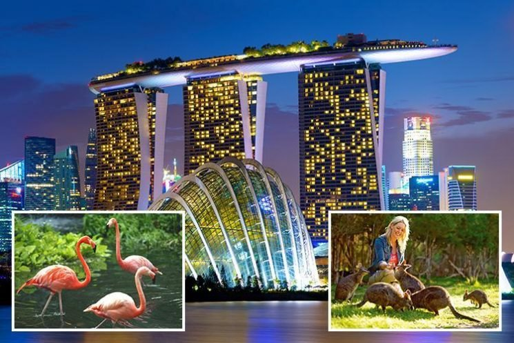 Double dip with trip to Singapore and Melbourne to see wildlife in the city