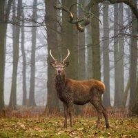 Four schoolboys arrested on suspicion of killing Queen's deer near Windsor Castle