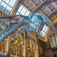 Prepare to be terrified at the Natural History Museum's Halloween pop-up cinema
