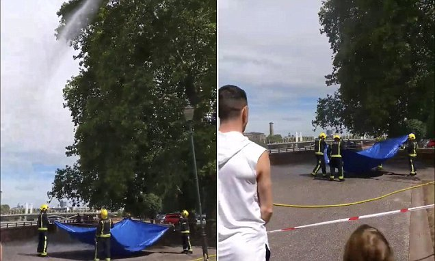 London firefighters use high-powered hose to blast DRONE out of a tree