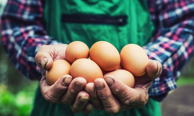 Farmers push for steep rise in the price of eggs as soaring feed costs