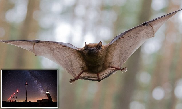 Five MILLION bats are killed by wind turbines every year