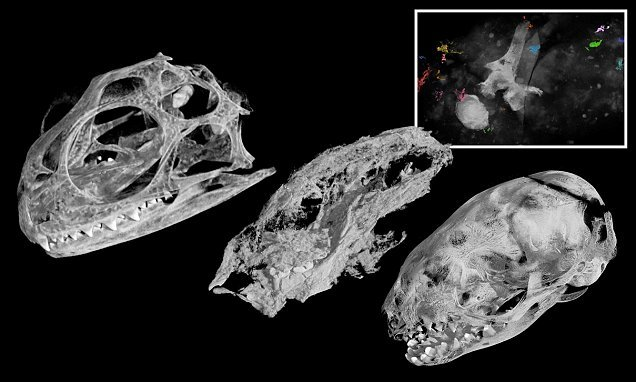 'Rarest of the rare' fossil of a prehistoric egg-laying rat is found