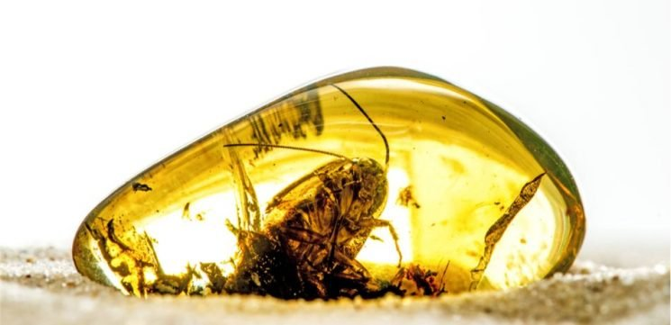 99-Million-Year-Old Beetle Found In Myanmar Amber Was An Early Pollinator Of Mesozoic Cycads