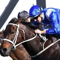 Why Winx is the best sporting ticket in town