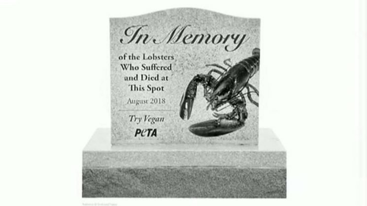 PETA wants Maine officials to build gravestone in memory of lobsters who died in truck crash