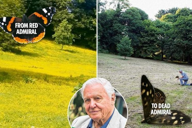 Hapless worker obliterates flower-filled meadow used for David Attenborough's Big Butterfly Count