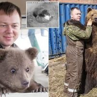 The incredible story of bear who was saved by Russian pilot as a cub