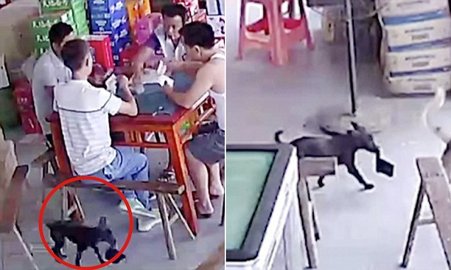Cops shocked to discover identity of wallet thief after checking CCTV