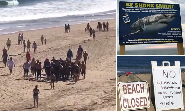 Man, 26, dies after being attacked by a shark in Cape Cod