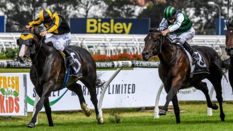Trapeze Artist fresh and ready to go in the Theo Marks Stakes