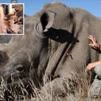 This Morning viewers sickened by trophy hunter mum who boasts of killing 100 different species of animals including rhinos and lions
