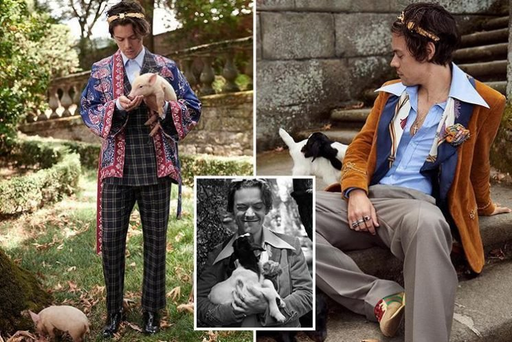 Harry Styles cuddles a piglet as he's unveiled as the new face of Gucci's Cruise 2019 collection