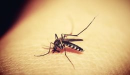 Gene Editing Tool CRISPR Wipes Out Colony Of Malaria-Causing Mosquitoes