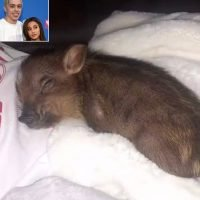 Pete Davidson Adopts a Pig with Ariana Grande — and Celebrates Their New Pet with a Tattoo