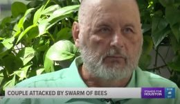 Couple Stung Around 600 Times by Bees While Working in Their Yard: 'They Overwhelmed Me'