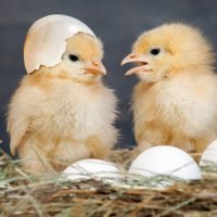 Physicists actually solved the chicken or egg conundrum