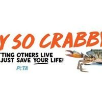 PETA to put up new 'Why so crabby' sign in Maryland, continuing billboard battle with seafood restaurant