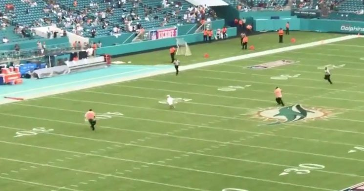 Young Dolphins fan runs on the field during delay