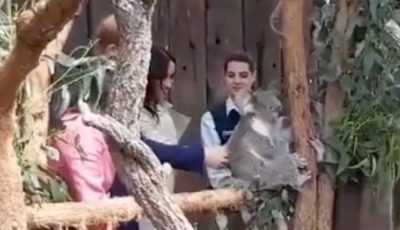 Meghan Markle can't stop giggling as Prince Harry strokes koala at Taronga Zoo