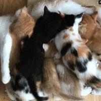 Loving cat adopts her orphaned grandchildren after daughter dies