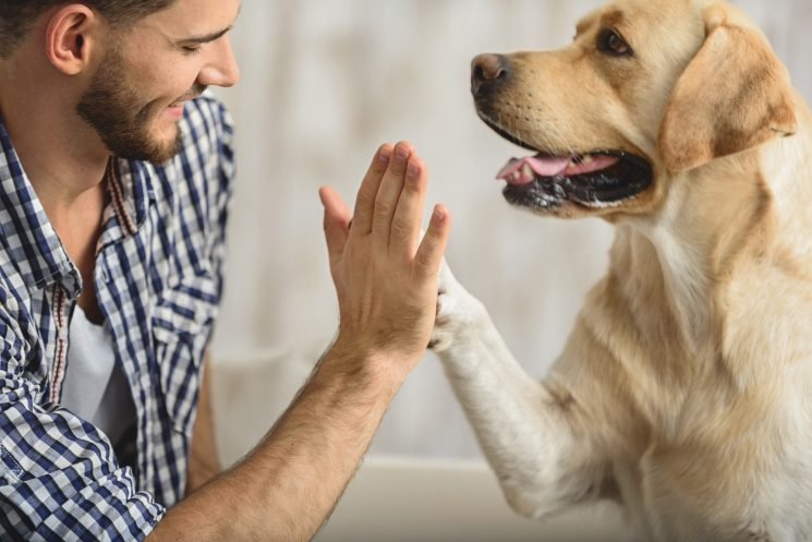 Dogs are capable of understanding the words you're saying to them