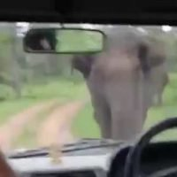 Wild elephants CHARGE at terrified tourists in a safari bus