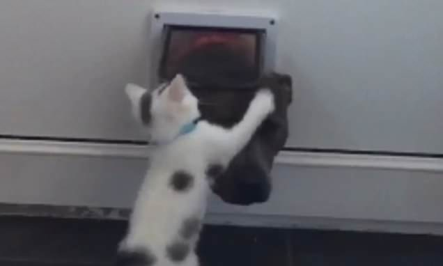 Kitten tries to stop dog from using cat flap by SHOVING its head